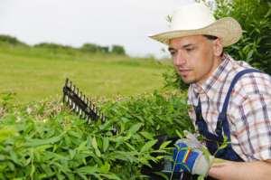 Ein Gärtner bei der Pflege von Grünanlagen