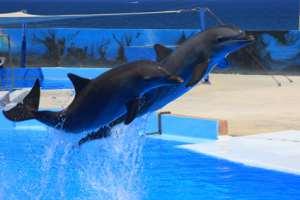 Inhalt des Artikels sind Selbstbewusstsein und Intelligenz von Tieren.