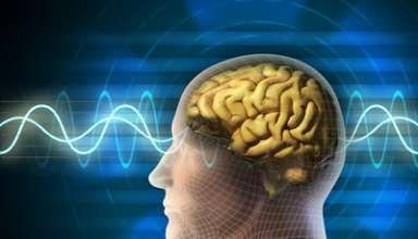 Menschlicher Kopf und Gehirn.