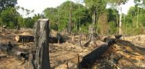 Abholzung auf Sumatra bedroht das Klima