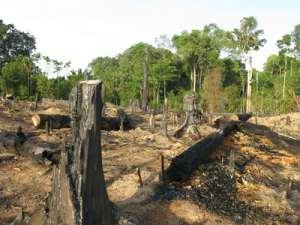 Brandrodung von einem Waldstück