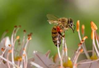 Bio hilft Technologien: Bienen inspirieren Kamerahersteller