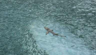 Hai in Strandnähe: So verhalten Sie sich am besten