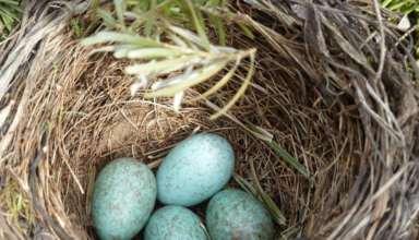 Wieso kein Ei dem anderen gleicht