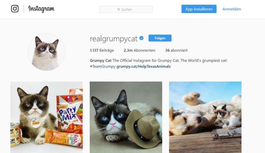 Tierischer Werbetrend: Unternehmen werben mit Petfluencern